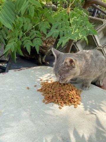 久しぶりに会えた猫ちゃんを写しました✨😄
