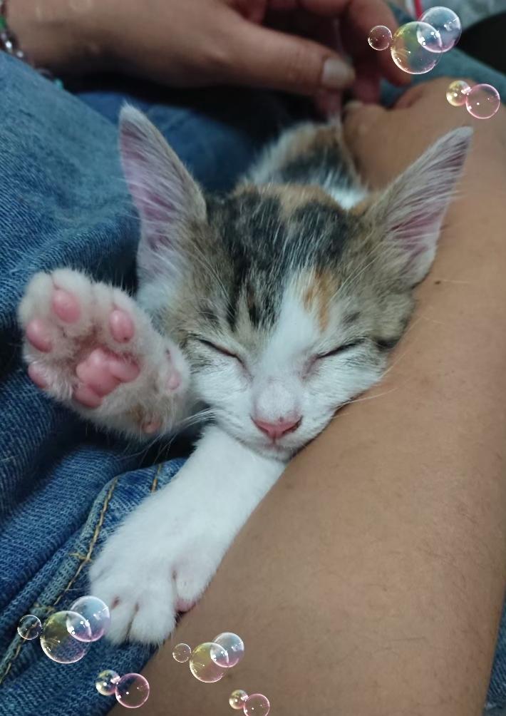眠たくなったらお膝の上に乗ってきて抱っこのまま夢の中
