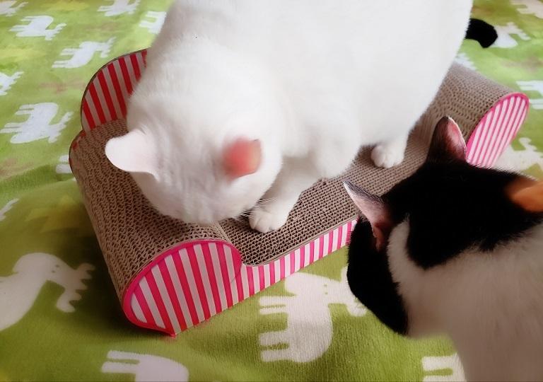 猫ママ11