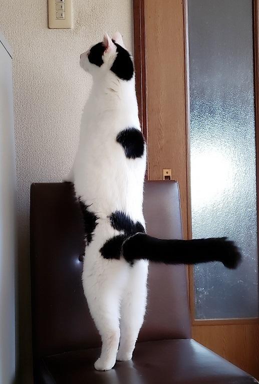 猫ママ21