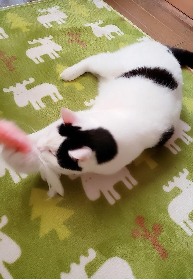 猫ママ22