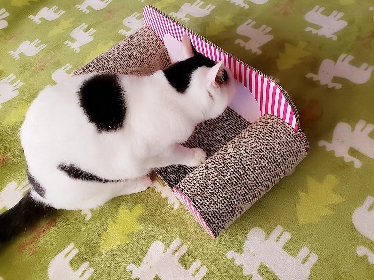 猫ママ27