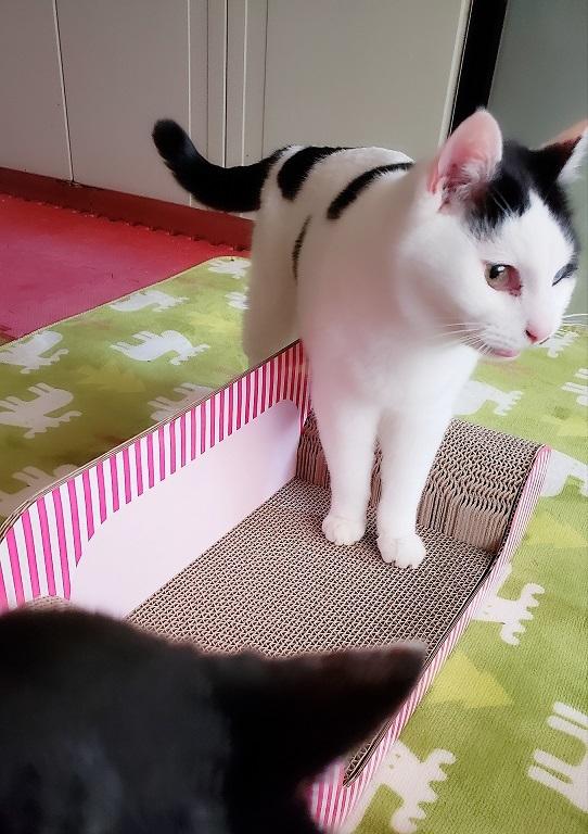 猫ママ19