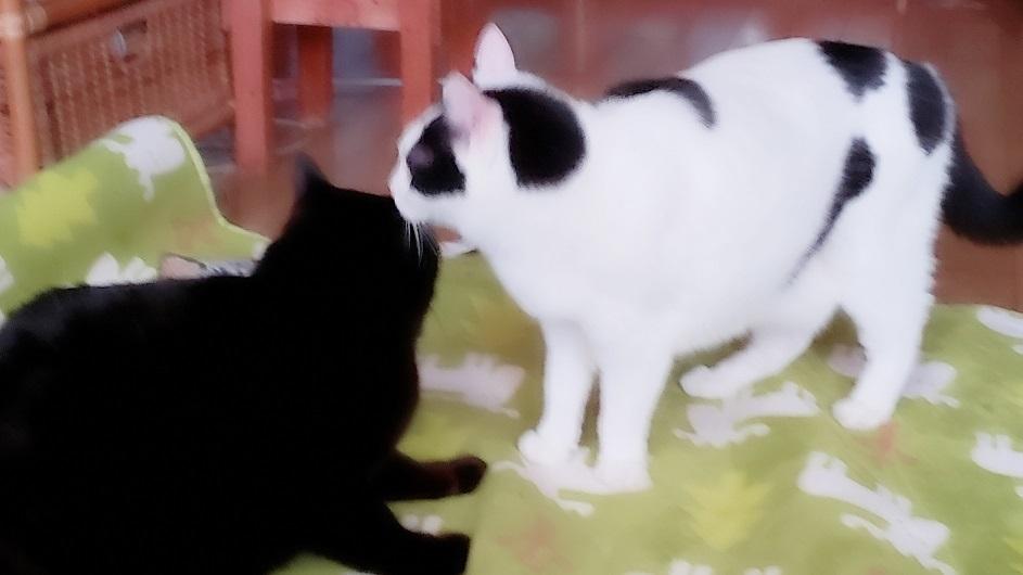 猫ママ32