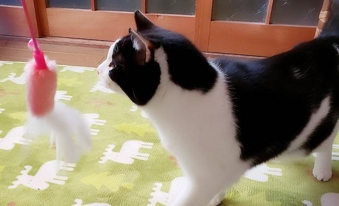 猫ママ26
