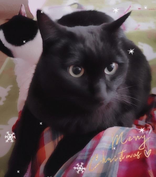 猫ママ35