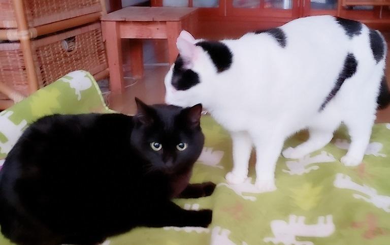 猫ママ45