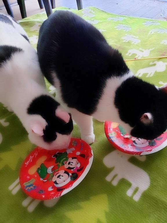 猫ちゃんママ47