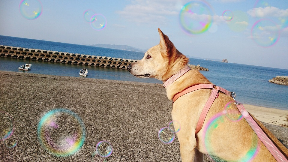 マリリン②冬の海を眺めるマリリン✨❤️✨