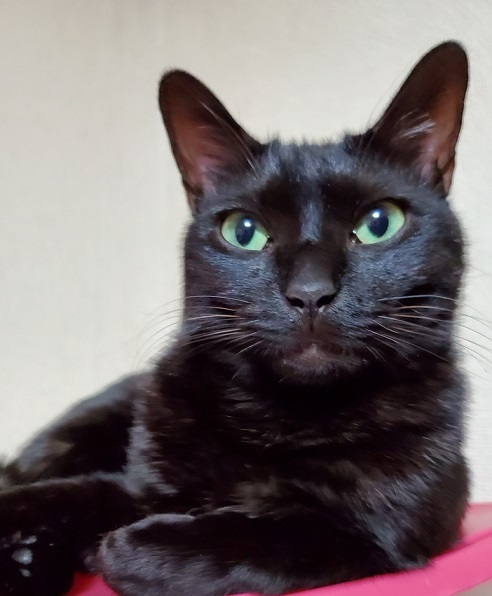 エミちゃん、小柄の黒猫ちゃんがあずみちゃんです