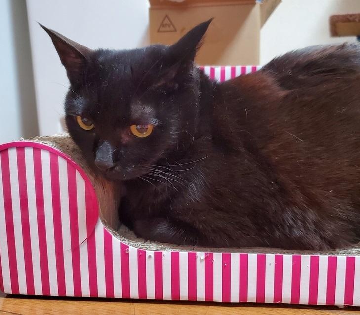 エミちゃん、1黒猫の小梅ちゃんは爪研ぎがお気に入りです