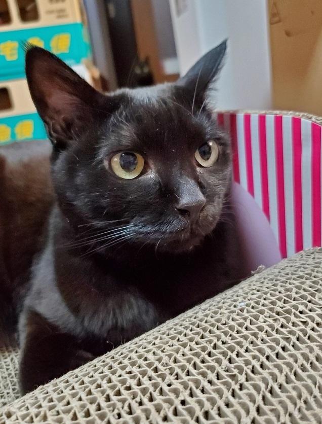 エミちゃん、黒猫の小梅ちゃんは爪研ぎがお気に入りです