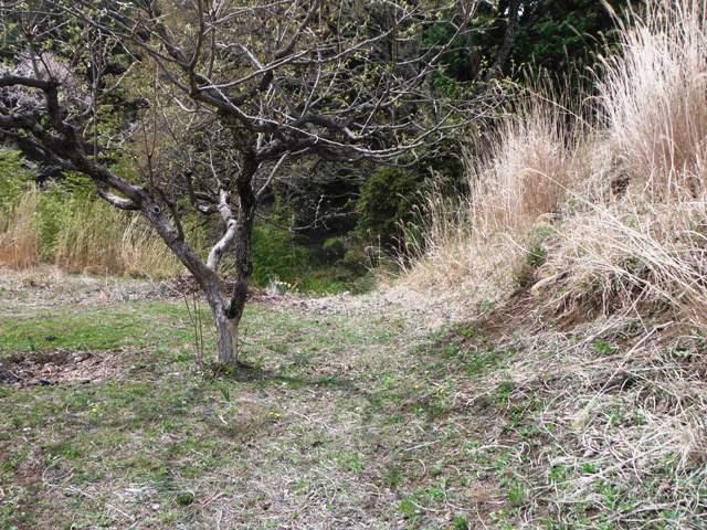 日輪寺畑砦 (19)