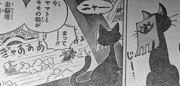 ワンピース バオフォン 猫