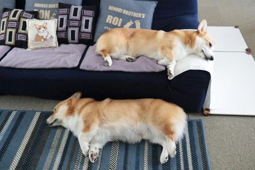 ソファーの上下でネムネムちう