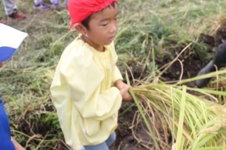 稲刈り (17)