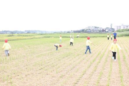 稲刈り (56)