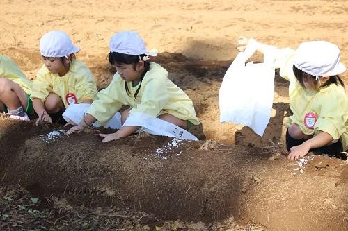 20201029 花組お芋掘り (12)