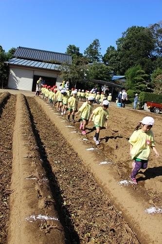 20201029 花組お芋掘り (2)