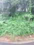 P_1276_2020061213450772c.jpg