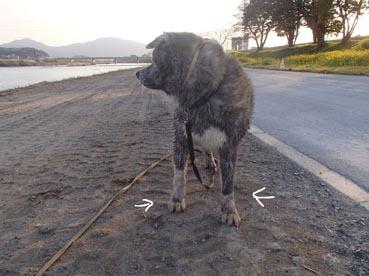 汚れ犬12