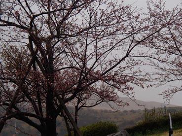 雨の中14