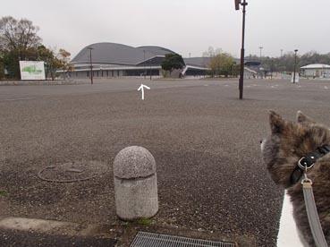 雨の広場6
