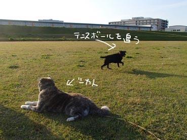 タロくんボール6