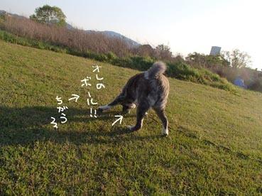 タロくんボール8