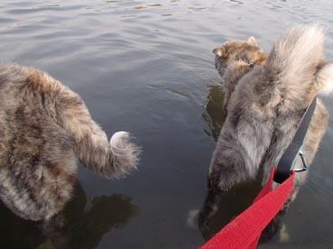 水犬ダブル2