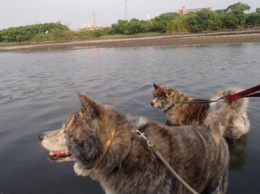 水犬ダブル3