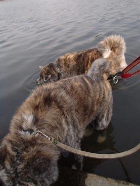 水犬ダブル4