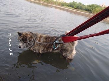 水犬ダブル5