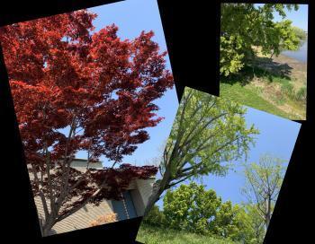 Collage_Fotor2020051apu_convert_20200501111548.jpg