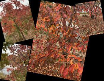 Collage_Fotor2dhsajgdf_convert_20201113173458.jpg