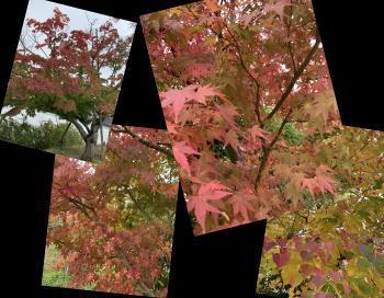 Collage_Fotor5ghdgd_convert_20201113173037_convert_20201113173323.jpg