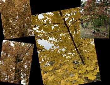 Collage_Fotor8gfjhff_convert_20201113173233.jpg