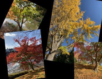 Collage_Fotorsgg_convert_20201122102134.jpg