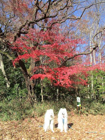 blog10146.jpg