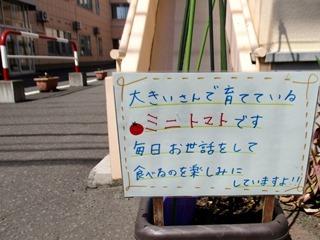 tomatosaibai2020_2.jpg