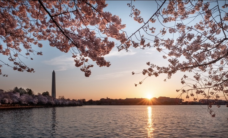 dc_cherry_blossom.jpg