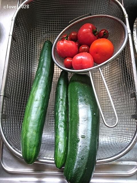 20200801_105551_家庭菜園_ズッキーニ、キュウリ、トマト