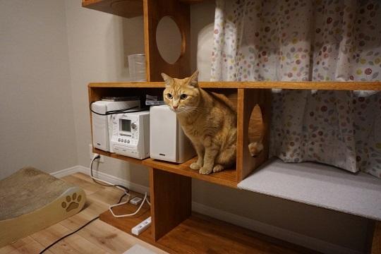 猫9DSC02944