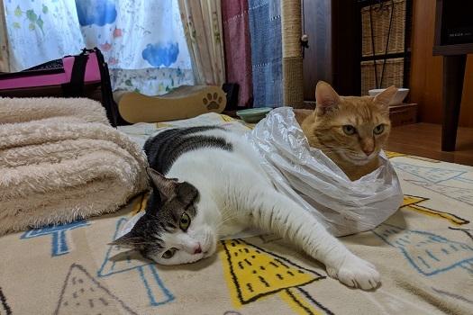 猫2IMG_20190101_140824