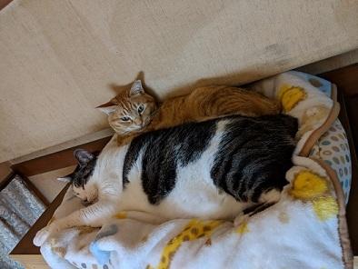 猫3IMG_20190128_184154