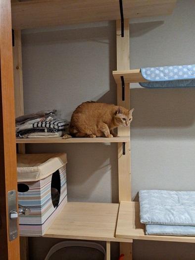猫1IMG_20190927_181716