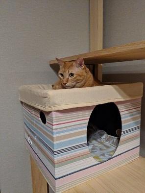 猫2IMG_20190912_185052