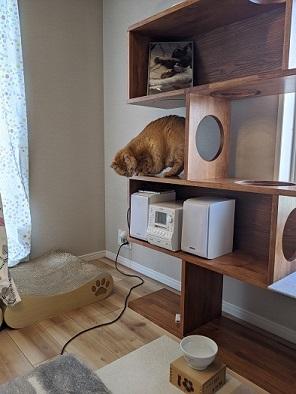 猫2IMG_20200424_103353