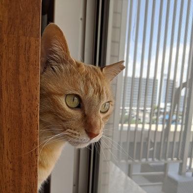 猫3IMG_20200424_103136