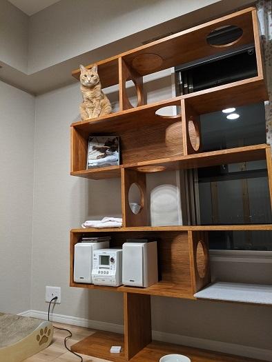 猫4IMG_20200325_231938
